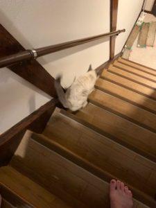 階段おりるとこ